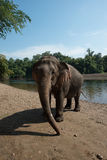 ElephantsWorld Kanchanaburi Thailand Arkivbild
