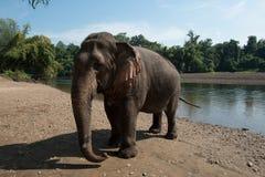 ElephantsWorld Tailandia Fotografia Stock Libera da Diritti