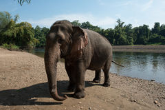 ElephantsWorld Thaïlande Photographie stock libre de droits