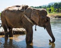 ElephantsWorld Thailand Arkivbild