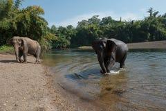 ElephantsWorld Royalty Free Stock Photography