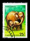 Elephas maximus dell'elefante asiatico, serie, circa 1991 Fotografia Stock