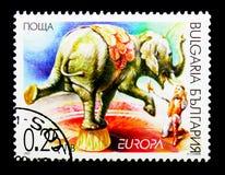 Elephasmaximus för asiatisk elefant, Europa C E P T 2002 - Circu Royaltyfria Bilder