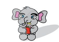 Elephat Stockfoto