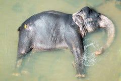 Elephatnt Imagenes de archivo
