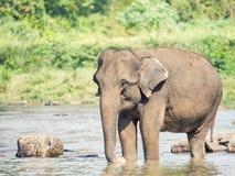 Elephatnt Stock Photos