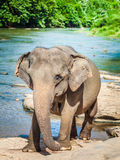 Elephatnt Royalty Free Stock Photography