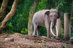 Elephent Tailandia imagen de archivo libre de regalías
