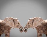 Elephnat couple against gray background Stock Photos