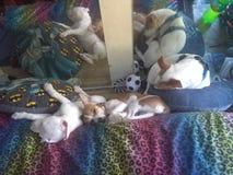 Eles que dormem foto de stock