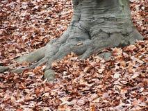 Eletree Arkivfoto