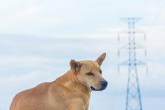 Eletricidade e cão Foto de Stock