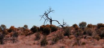 Elevação da árvore com um só olho Imagens de Stock Royalty Free