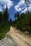 Elevação da estrada de terra nas montanhas entre os pinheiros altos contra o céu azul foto de stock royalty free