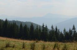 Elevação da estrada de terra nas montanhas entre os pinheiros altos contra o céu azul fotografia de stock royalty free