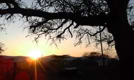Elevação de Sun em montanhas de Lebombo e na árvore bonita do espinho Imagem de Stock