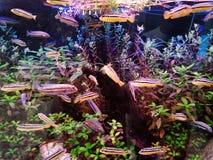 Elevação dos peixes, de modo que a beleza seja para sempre imagem de stock royalty free