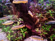 Elevação dos peixes, de modo que a beleza seja para sempre 1 imagens de stock royalty free