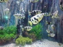 Elevação dos peixes, de modo que a beleza seja para sempre 2 imagens de stock