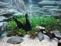 Elevação dos peixes, de modo que a beleza seja para sempre 4 imagem de stock