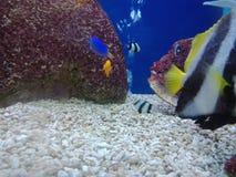 Elevação dos peixes, de modo que a beleza seja para sempre 5 foto de stock