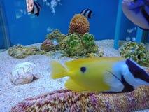 Elevação dos peixes, de modo que a beleza seja para sempre 6 fotos de stock royalty free