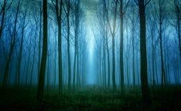 Elevação impressionante entre as árvores na névoa do amanhecer fotos de stock