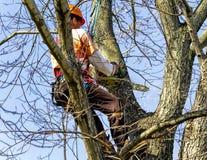 Elevação profissional na árvore que remove os membros fotografia de stock