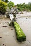 Elevações do nível do mar e árvores de desmoronamento fotos de stock