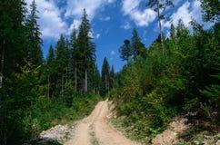 Eleva??o da estrada de terra nas montanhas entre os pinheiros altos contra o c?u azul imagens de stock royalty free