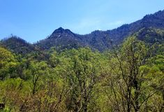 Eleva??o fumarento Gatlinburg tn da floresta do parque nacional da montanha imagem de stock royalty free