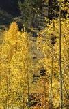 Elevación de esquí en la caída imagen de archivo libre de regalías