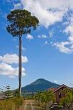 Elevada árvores fotos de stock