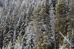 Elevador de cadeira entre árvores na estância de esqui fotografia de stock