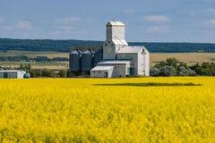 Elevador de grano detrás del campo amarillo brillante del Canola imagen de archivo libre de regalías