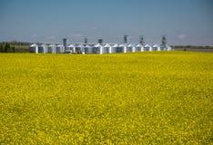 Elevador de grano detrás del campo de la floración de la rabina imagen de archivo libre de regalías
