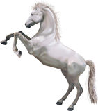 Elevando o cavalo Imagens de Stock Royalty Free