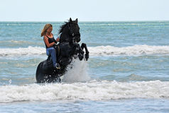 Elevando o cavalo no mar imagens de stock royalty free