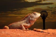 Elevação do camaleão Fotos de Stock
