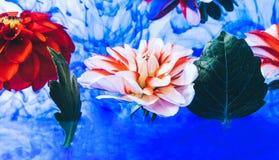 Elevar y mantener flotando las flores hermosas debajo del agua fotografía de archivo