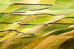 Elevata altitudine che coltiva nell'Ecuador Fotografie Stock Libere da Diritti