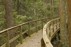 Elevated Boardwalk Through A Forest Stock Image