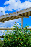 Elevated highway. With spring flowers in foreground Royalty Free Stock Photo