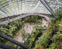 Elevated view of Cloud Forest, Singapore. Looking down from walkway in Cloud Forest in Gardens by the Bay, Singapore Royalty Free Stock Photography