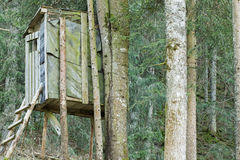 An elevated wooden platform known as Tree stand or Deer stand Royalty Free Stock Photo