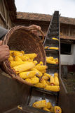 Elevator for corn cobs with basket Stock Photos
