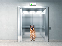 Elevator security Stock Image