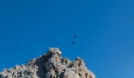 Elevazione degli avvoltoi Fotografie Stock