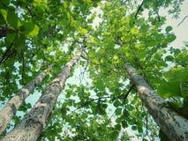 Elevazione dell'albero fotografia stock