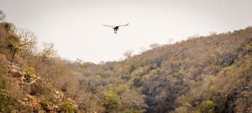 Elevazione dell'avvoltoio Fotografia Stock Libera da Diritti